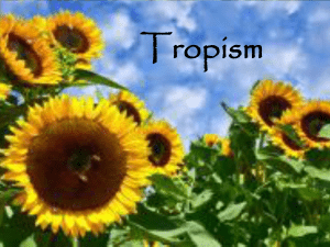 Tropism - WordPress.com