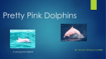 Pretty Pink Dolphins