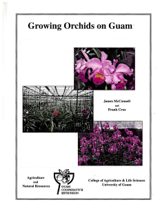 Growing Orchids on Guam - www.CNAS-RE.uog.edu