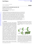 Growth of curved and helical bacterial cells