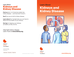 Kidneys and Kidney Disease - National Kidney Foundation