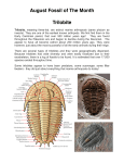 August Fossil of The Month Trilobite