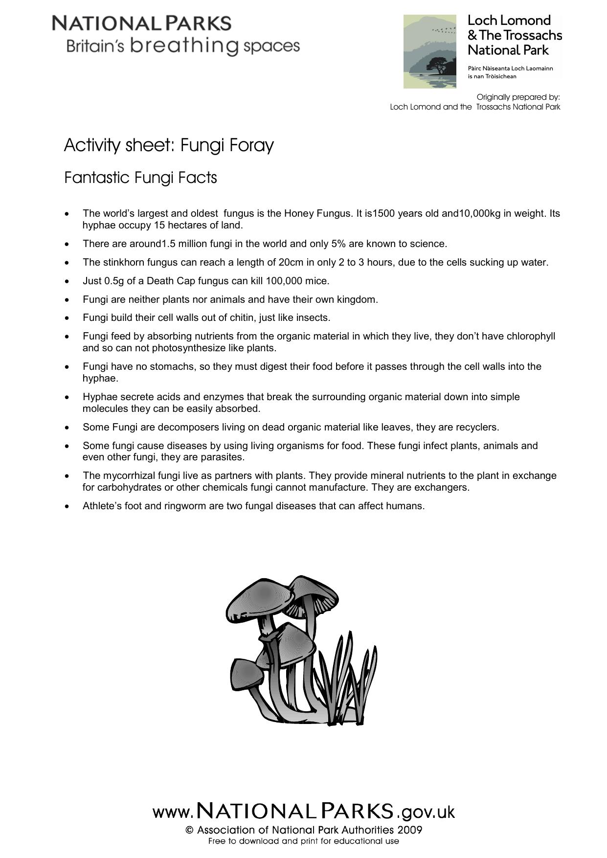 Activity worksheet Fungi foray