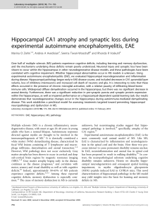 Hippocampal CA1 atrophy and synaptic loss during
