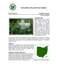 Multiflora rose - Ohio Invasive Plants Council