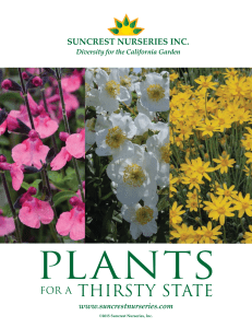 here - Suncrest Nurseries, Inc.
