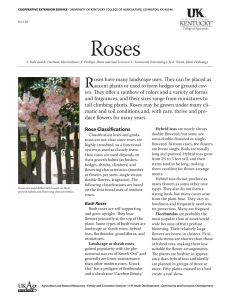 ID-118: Roses - UK College of Agriculture