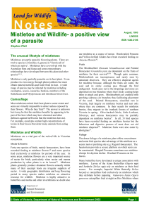Mistletoe and Wildlife- a positive view of a parasite