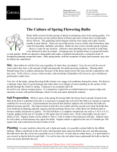 The Culture of Spring Flowering Bulbs