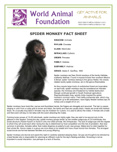 spider monkey fact sheet - World Animal Foundation