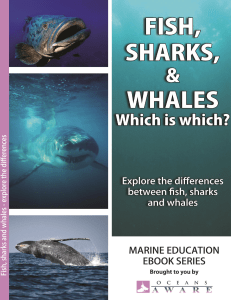 What are the differences between fish, sharks and whales?