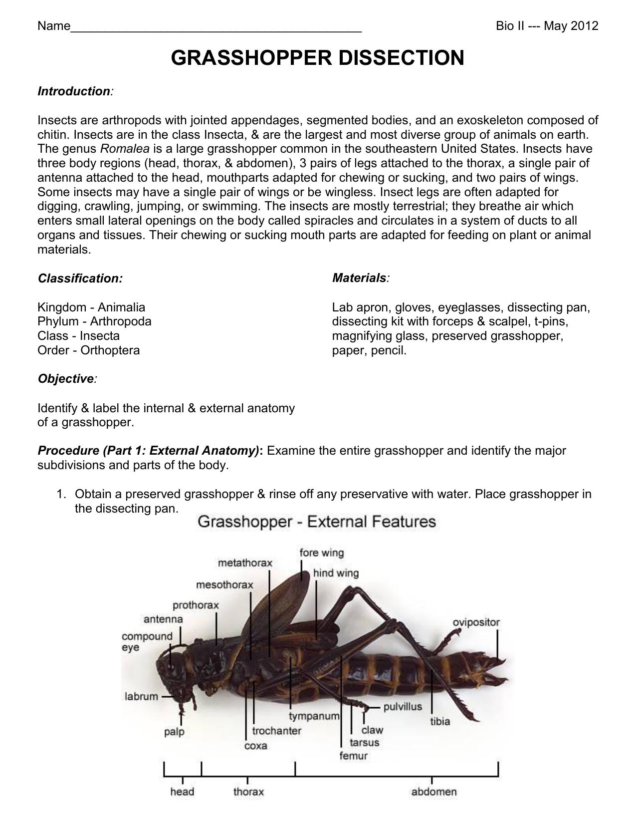 grasshopper dissection - Hamilton Local Schools