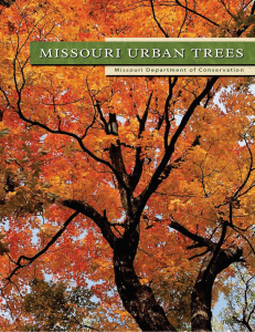 Missouri Urban Trees - Forest ReLeaf of Missouri