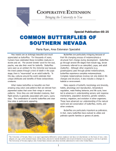 Common Butterflies of Southern Nevada