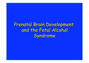 Prenatal Brain Development and the Fetal Alcohol Syndrome