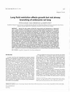 Lung fluid restriction affects growth but not airway branching of