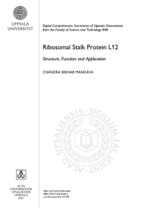Ribosomal Stalk Protein L12: Structure, Function and