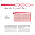 Ascending Sensory Pathways