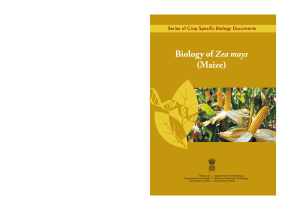 Biology of Maize