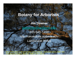 Botany for Arborists - Street Tree Seminar