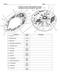 Plant Cell - studyres.com