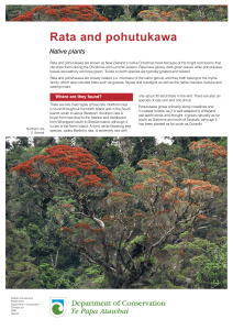 Rata and pohutukawa - Department of Conservation