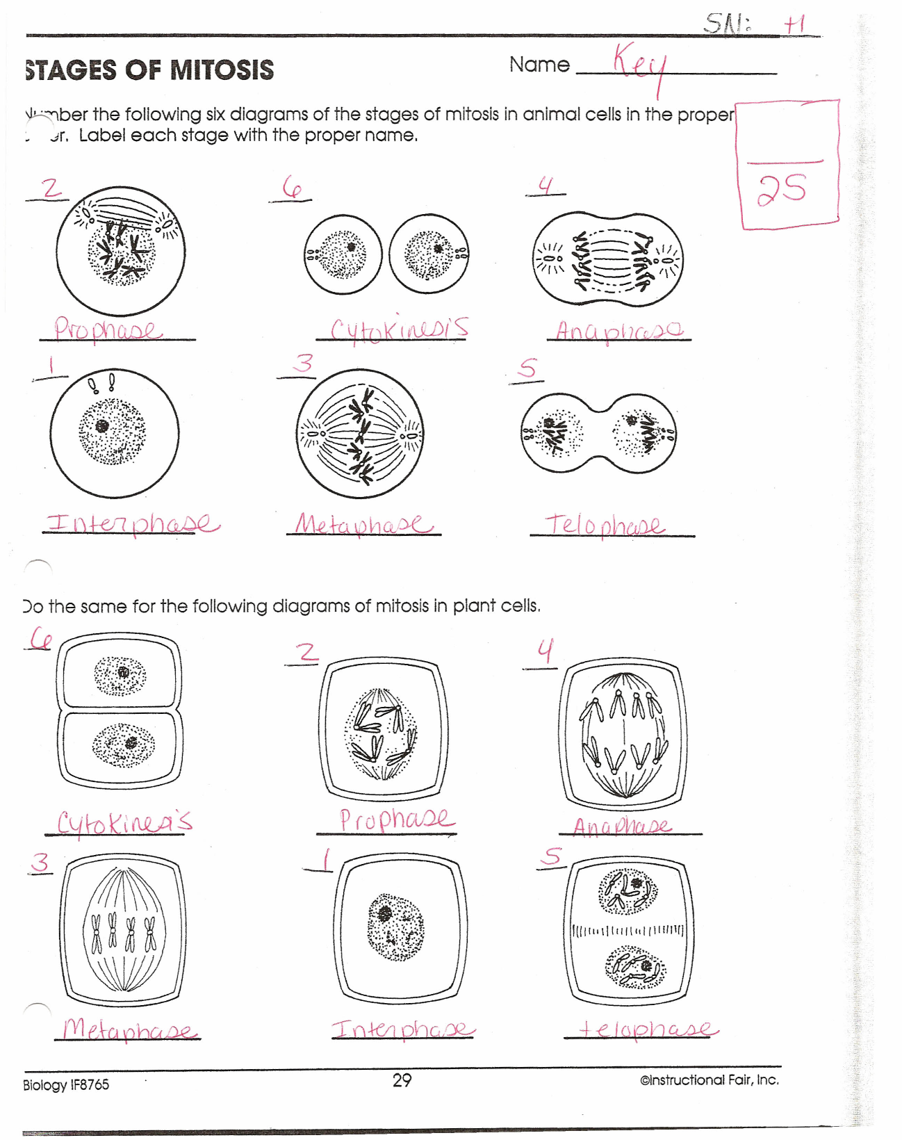 Worksheets Mitosis Phases Worksheet 013396067 1 74019b9a2c355f42756190f7e78de852 png