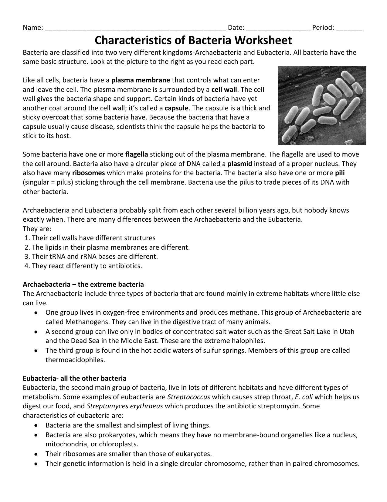Characteristics of Bacteria Worksheet