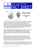 Brine Shrimp - the National Sea Grant Library
