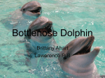 Bottlenose Dolphin - nahsoceanography2010