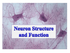 Neuron Types, structure and function_PowerPoint