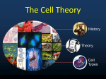 The Cell Theory .ppt
