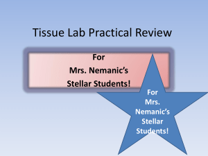 Tissue Lab Practical Review