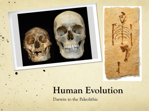 Human Evolution - MStew