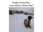 Forget Hump Day* How about a Snow Day?