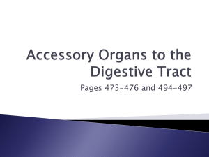 Accessory Organs to the Digestive Tract