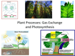 Plant Processes: Photosynthesis