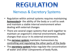 Regulation- Excretory System PPT PreAP