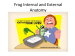 Frog Internal and External Anatomy