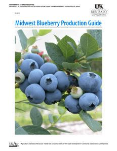 Midwest Blueberry Production Guide