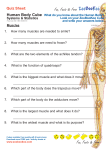 Human Body Quiz P6 - Muscles