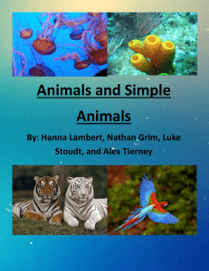 Animals and Simple Animals