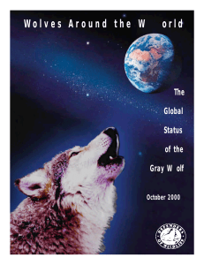 World Wide Wolves