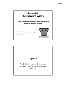 Section 04: The Endocrine System Section 04: The Endocrine