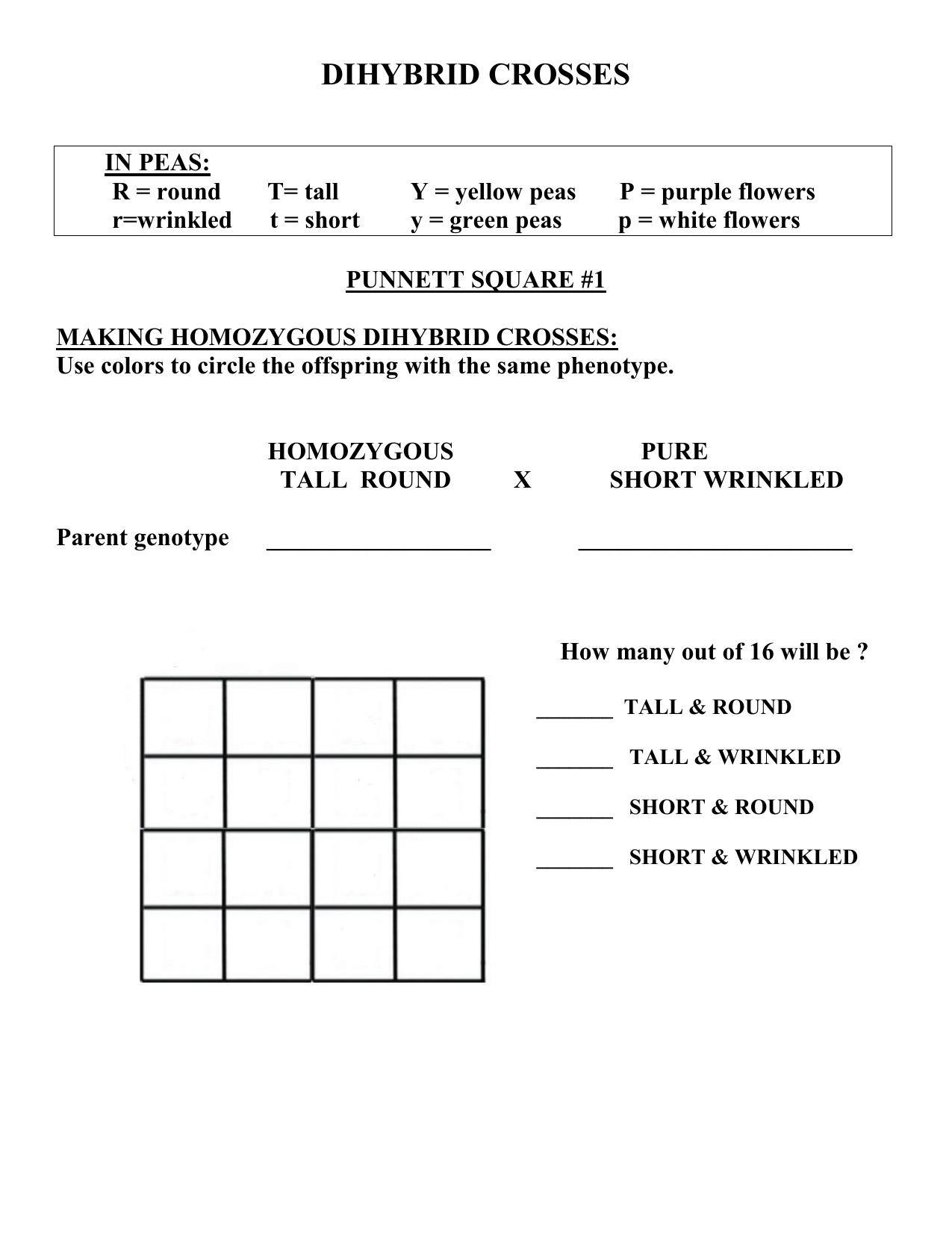 Dihybrid Cross Punnett Square Worksheet - Phoenixpayday.com