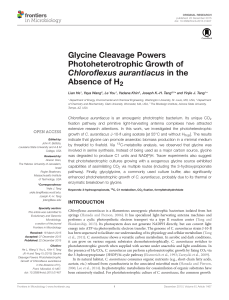 Glycine Cleavage Powers Photoheterotrophic Growth of