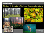 Meeting 4: Evolution, Plant and Animal Adaptations