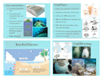 Coral Facts - Basic Reef Structure Coral Bleaching