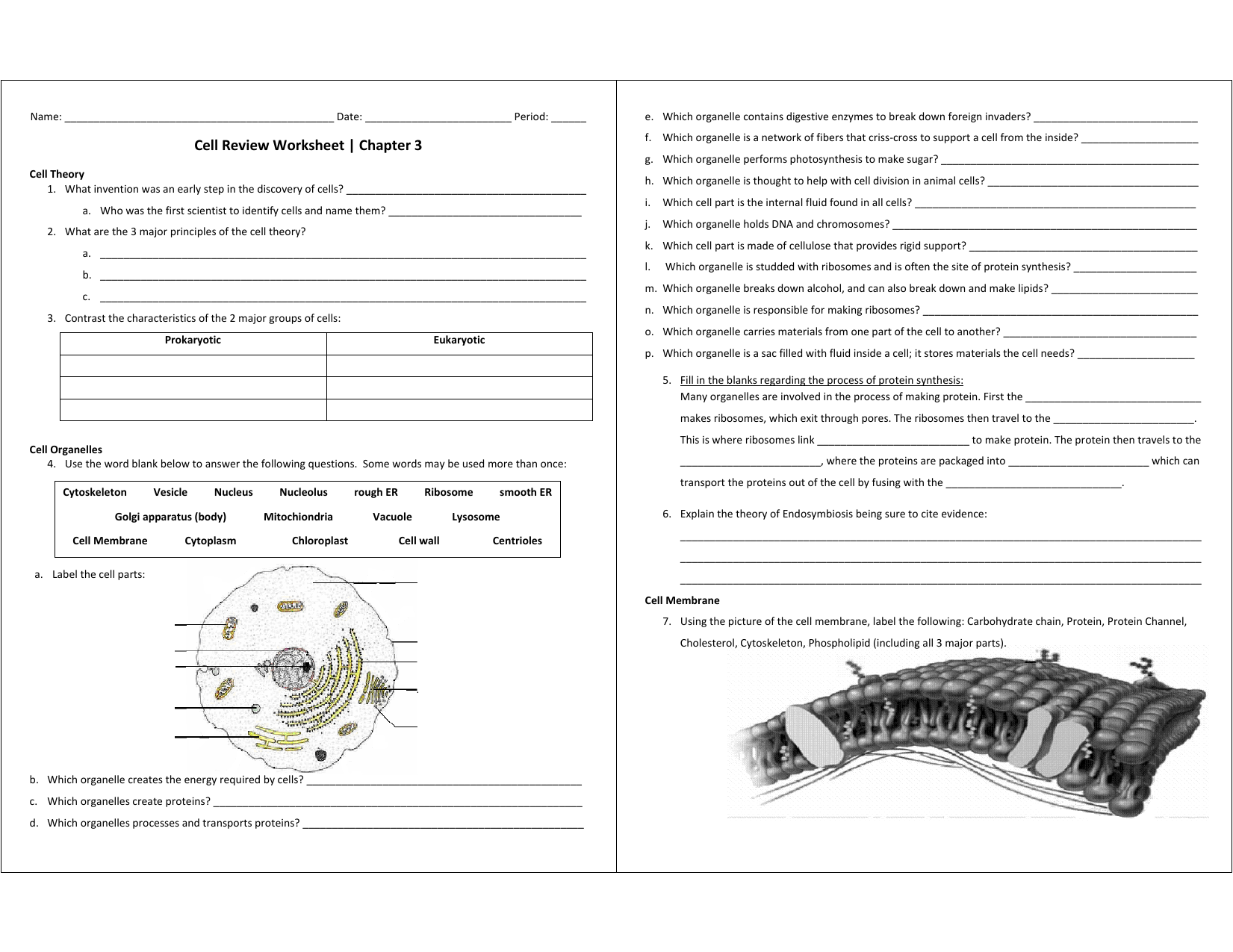 Cell Organelle Matching Game Printable