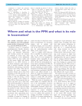 Where and what is the PPN and what is its role in locomotion?